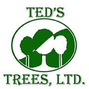 Landscape Contractor In Austin Texas Ted S Trees