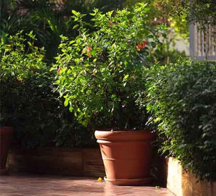 Great Plants   Garden Supplies In New London, NC