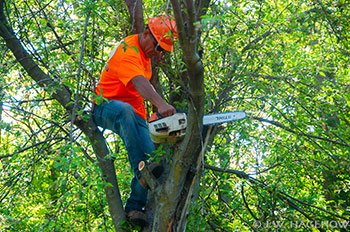 Tree Service Charlotte Nc