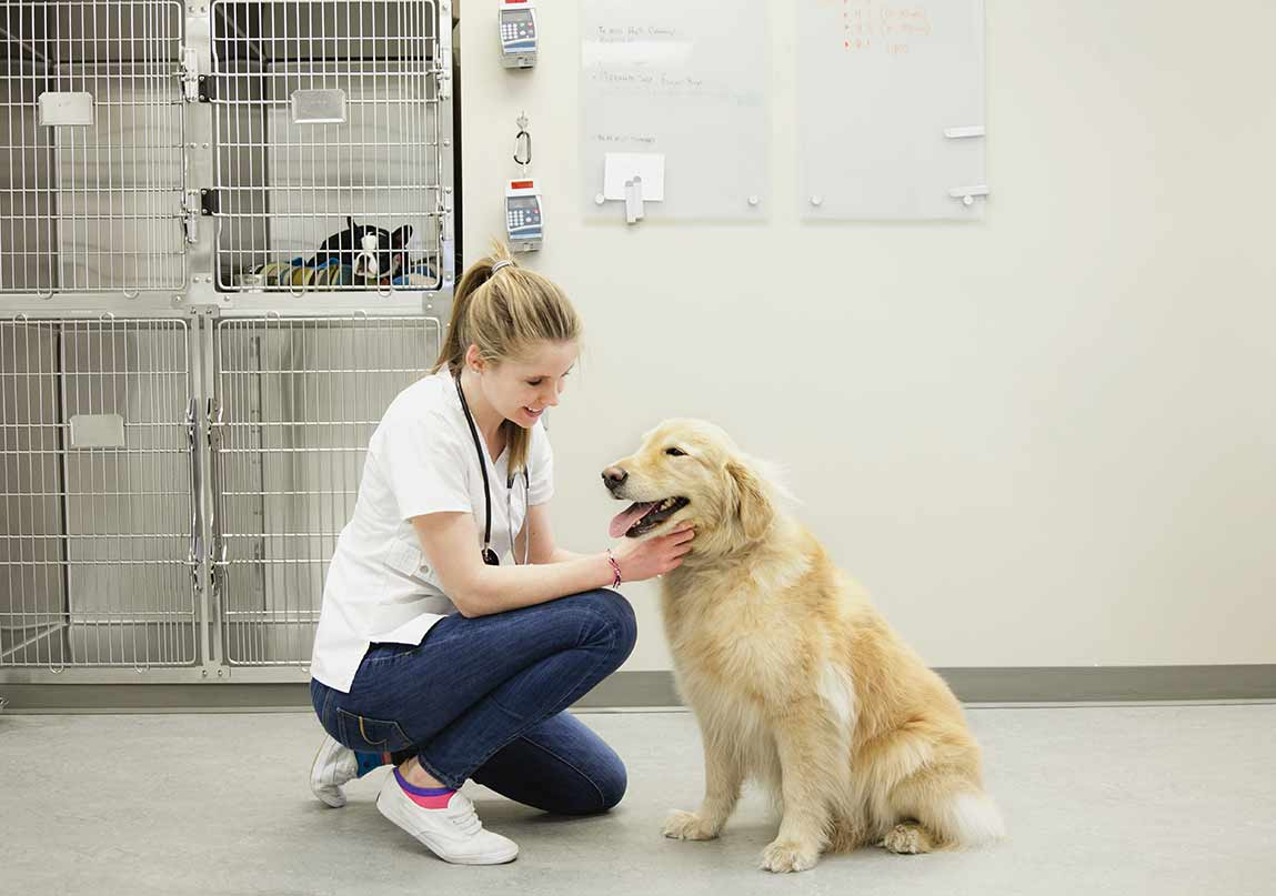Signs Of Kidney Disease In Your Aging Dog And Ways You Can Help Prevent The Condition
