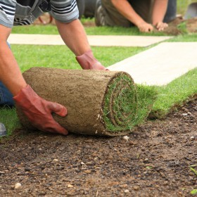 â Ray Turf Farms In Mead Wa Is A Sod Farm That Offers Sod Delivery And Installation