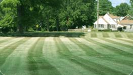 Lawn Maintenance Louisville Ky Wayne S Lawn Service