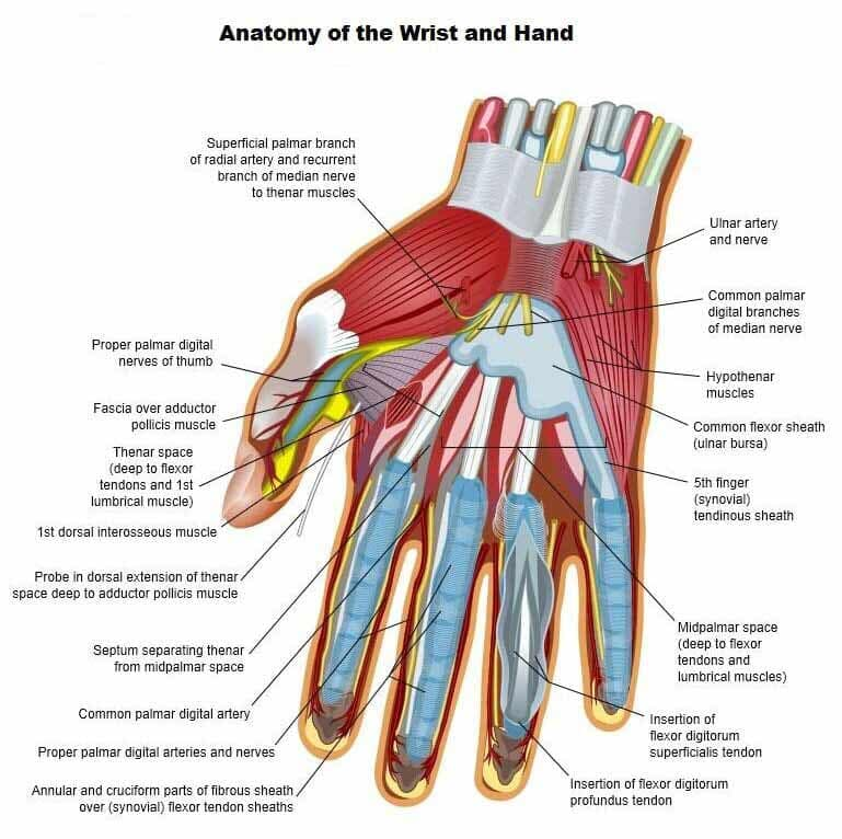 Nassau Suffolk Hand Therapist | East End Occupational Therapy | Long ...