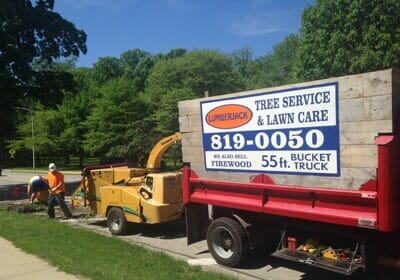 Tree Trimming Shaping Removal In Champaign Il Urbana
