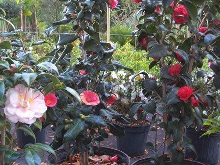 Palm Harbor Nursery Florida Landscaping Trees Flowers