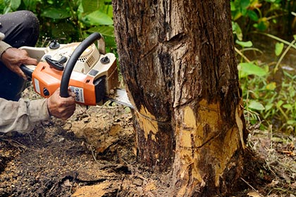 Complete tree removal - Tree removal services in Greenfield, MA