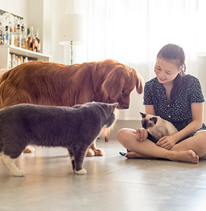 Premier Pet Groomer Mission Viejo Ca Groom At The Top