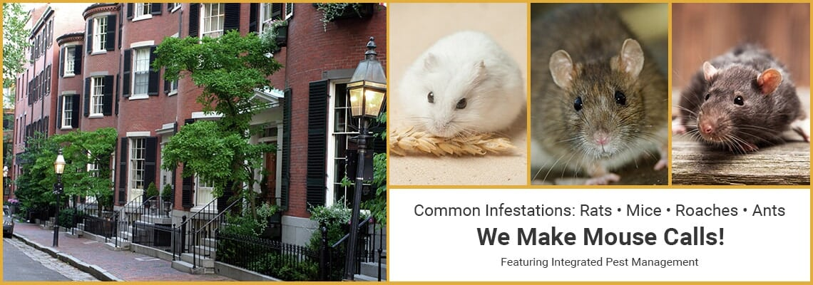 Commercial Pest Control - Boston, MA - Boris Pest Control, Inc